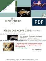 SzM_Die Weichtiere II..pptx