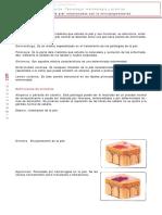 4_3_Trastornos_de_la_piel_2.pdf