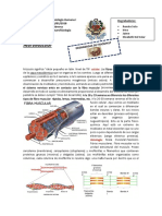 Degrabadas-FisiiologiaCAP1-Clase5