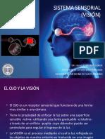 Sistema sensorial Visión