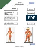 Sistema Muscular (1).docx