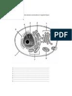 Taller célula eucarionte