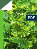 PLANTES MEDICINALES_ASTRAGALE_Lettre-IESV-Astragale