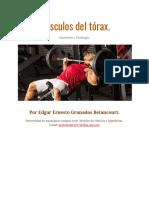 Músculos del torax