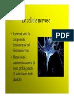 Pincherle Anatomia Snc1