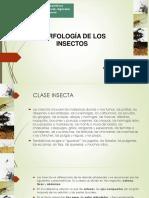 5-Ento_Morfología de los insectos A_29.02.2020.pdf