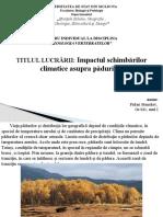 Impactul-schimbărilor-climatice-asupra-pădurilor