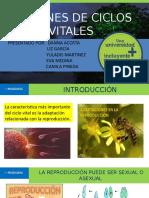 PATRONES DE CICLOS VITALES FINAL MAND