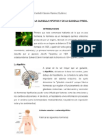 glandula hipofisis y pineal