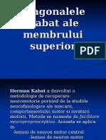 180169985-Diagonalele-Kabat-ale-membrului-superior-ppt.ppt