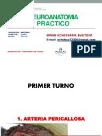 Práctico-Final-Neuroanatomía