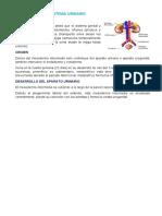 EMBRIOLOGIA DEL SISTEMA URINARIO resumenCOMPLETO.docx