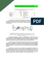 CARACTERES GENERALES DE LAS LEVADURAS