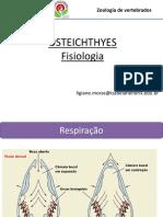 Osteichthyes_Fisiologia_2018 (1)
