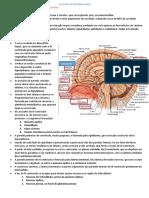 Resumo  - Anatomia do diencéfalo..docx