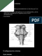 Neuroanatomiìa parte 2
