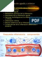Inflamacion_aguda_y_cronica