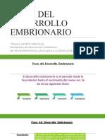 4 fases de desarrollo embrionario.pptx