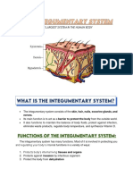 INTEGUMENTARY SYSTEM Reviewer SHS General Biology 2.pdf