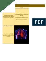 UC4 - Sistemas - Circulatório - Respiratório - Excretor e Urinário