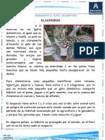 comunicación descripción animal y paisaje1