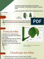 Plantas2.pptx