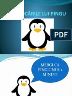 provocari_pinguini