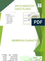 E.2 Membrana Plasmatica.pptx