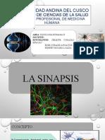 FisioII-Sinapsis