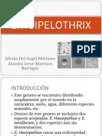 Copia de ERYSIPELOTHRIX ALONDRA