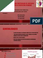intestino-grueso_expo.pptx IMP