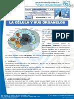 CIENCIA  INFORMACIÓN DE LAS CELULAS