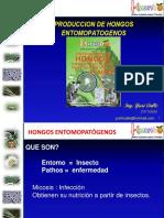 hongosentomopatgenos-111027130703-phpapp01
