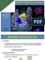 [PDF] DNA e Síntese de proteínas_compress