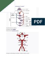 Aparato circulatorio 5
