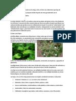 Ruda, Ortiga y Sabila tres plantas con futuro agroindustrial