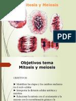 Mitosis y meiosis