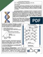 GUIA 2 ADN COMPOSICIÓN (1).docx