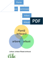 diversitatea plantelor.pptx