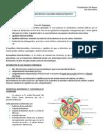 1. Desequilibrio Hidroelectrolitico 1.pdf