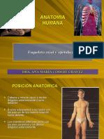 c1-esqueleto-axial-y-apendicular.ppt