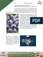 02. Manejo nutricional de arandano.pdf