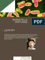 Bordetella pertussis.pptm