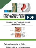female genitalia ass