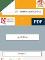 EF-Sistema Neurológico (1)
