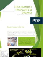 Genetica Humana y Trasplante de Órganos (1)