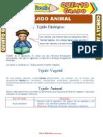 Tejido-Animal-para-Quinto-Grado-de-Primaria