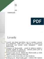 CURS-levuri.pptx
