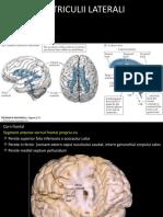 ventriculi laterali.pptx