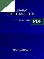 macroscopie aparat cardiovascular bun b